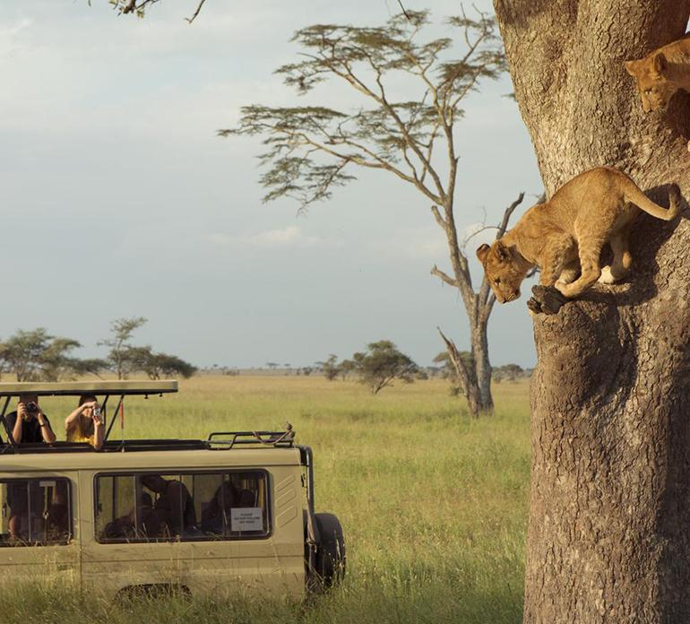 Wildlife Safaris Package Holidays