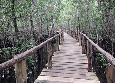 Jozani Forest Tour