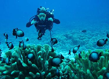 Diving & Snorkeling in Zanzibar